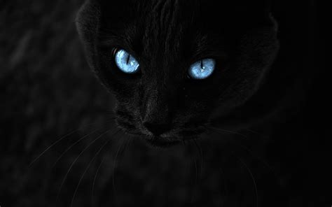cat wallpaper note 3 warrior cats wallpaper 183 download free awesome high