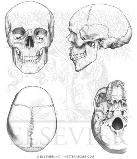 anatomy coloring pages skull skull coloring pages anatomy science sensory math