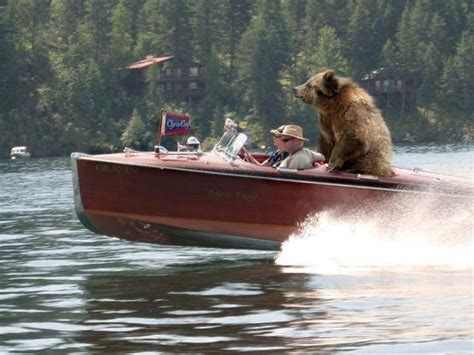 bear boat 17 best images about awesome wooden boats on pinterest