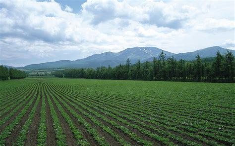 Line Crop in a line crop field wallpapers in a line crop field