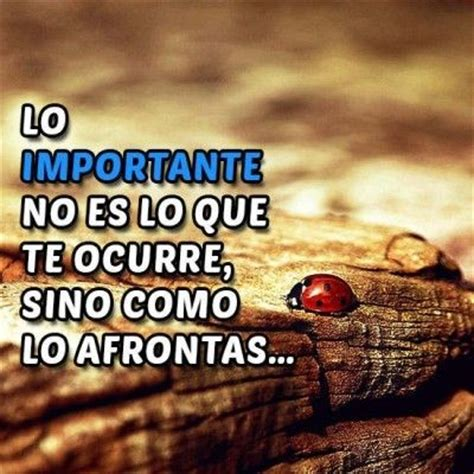 imagenes y frases de la vida diaria 574 best images about frases on pinterest amigos