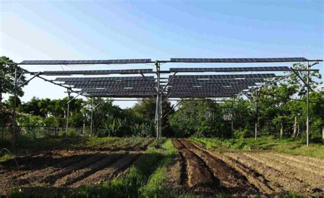 Japan Next Generation Farmers Cultivate Crops and Solar