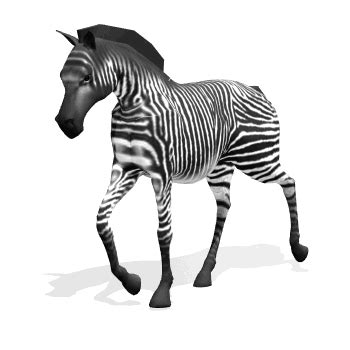 zebra gif find on giphy