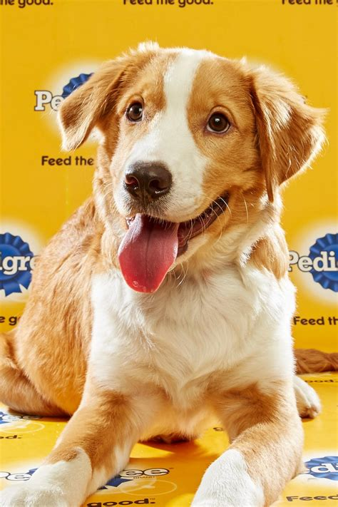 puppy bowl 2016 puppy bowl 2016 cooper reel with