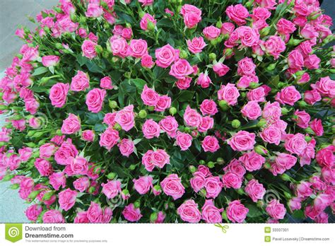 Renew Kitchen Cabinets by Large Bright Bouquet Of Freshly Cut Small Roses Stock Image Image 33337301