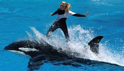 marine animal trainer