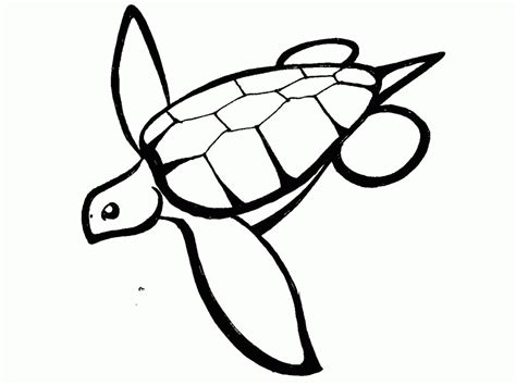 turtle outline car pictures coloring home