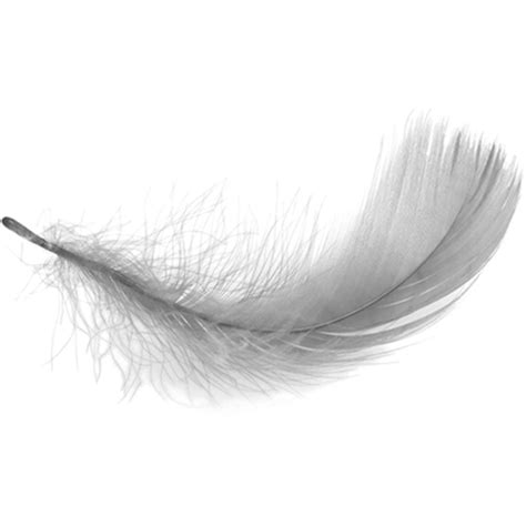 feather tattoo png white feather transparent png stickpng