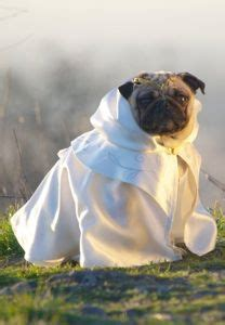 pugs of middle earth the book sniffer wondered how to draw a pug yes me the pages