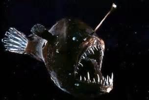 Ugly Animals   Angler Fish