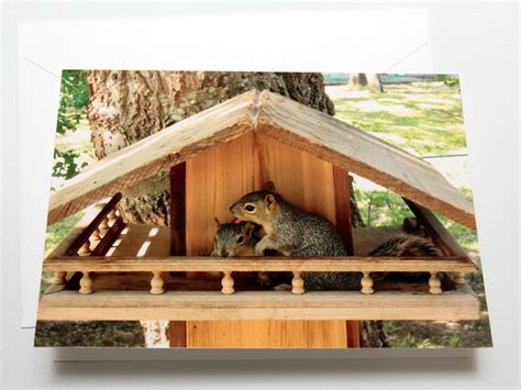 Squirrel Houses Plans Bob S Backyard Nature Photo Greeting Cards