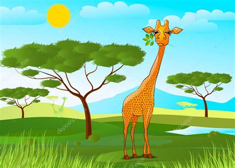 imagenes de jirafas comiendo hojas jirafa comiendo hojas en 193 frica al atardecer archivo