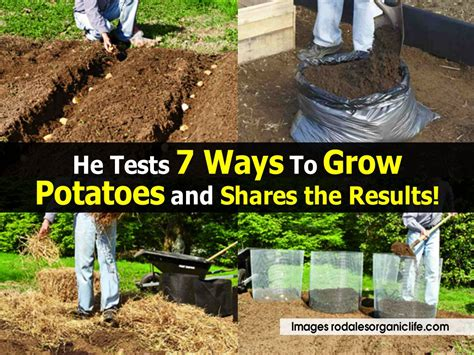 7 Ways To Confirm That He Is by He Tests 7 Ways To Grow Potatoes And Shares The Results