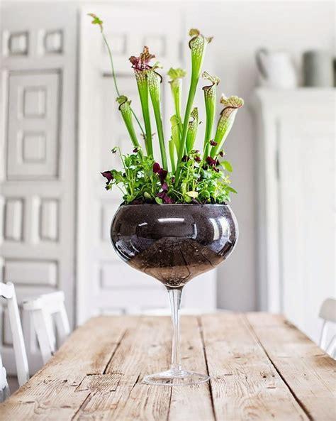 indoor garden ideas  images indoor garden