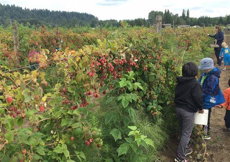 fruit near me vegetable farm near me best 20 produce stand ideas on