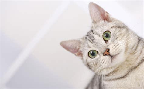 cat hd pictures hd desktop wallpapers  hd