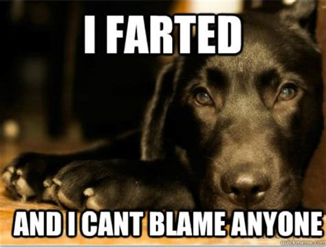 Dog Problems Meme - 17 grosser than gross moments in dog parenting rover com