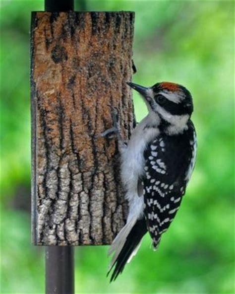 the zen birdfeeder june 2012