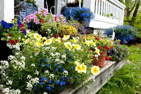 bedding plants   lawn  garden