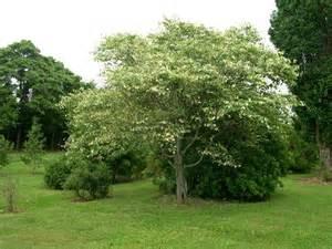siebenthaler s dayton s finest landscaping plant