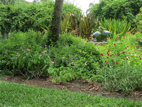Florida Flower Garden Florida Butterfly Garden Plants Wallpaper