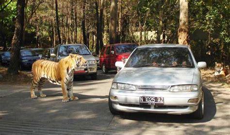 Sho Kuda Di Bogor taman safari cisarua jakarta jasa utama travel