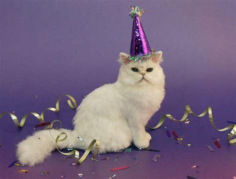 cat birthday birthday cat on