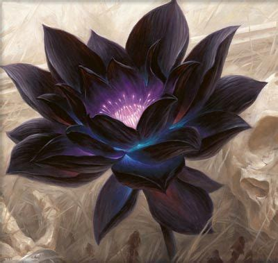 are lotus flowers poisonous pin by lydia webb on beautiful flowers