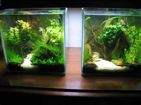 betta aquascape 17 best images about aquascape on pinterest cichlids
