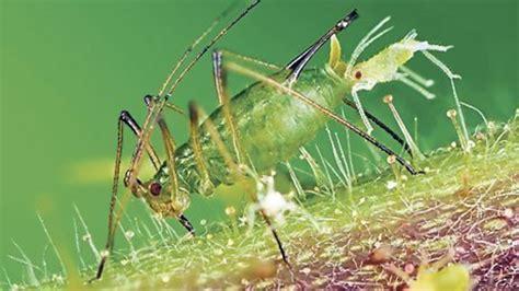Ameisen Vernichten Im Garten 4814 by Die Besten Ma 223 Nahmen Gegen St 246 Rende Ungeziefer Im Garten