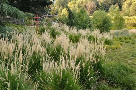 59 best images about maclean final plant selections on