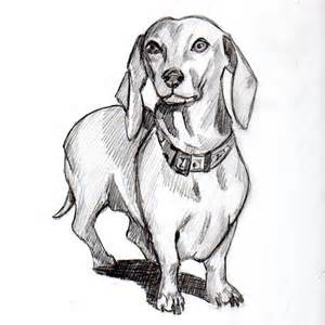 Cute dachshund drawing my miniature dachshunds
