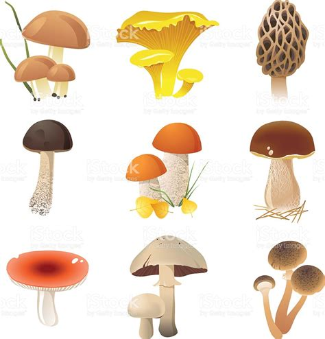 clipart illustrations agaricomycetes clipart clipground