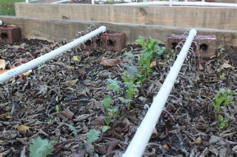 raised bed garden irrigation irrigation for raised bed gardening modern homemakers