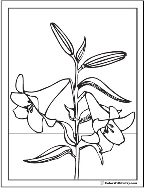 lily coloring pages customize 12 pdf printables