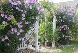 pflanzen als sichtschutz terrasse welche pflanzen als sichtschutz f 252 r garten und terrasse
