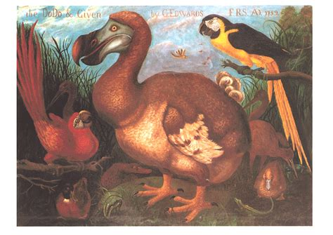 the dodo dodo 171 lewis carroll society of america