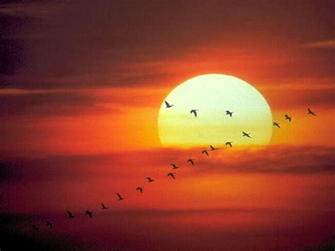 imagenes sorprendentes del sol la salud con el sol ecologia mistica