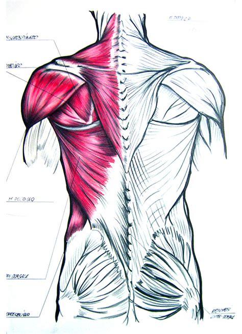 tavola anatomica tavola anatomica corpo umano disegnata a mano a