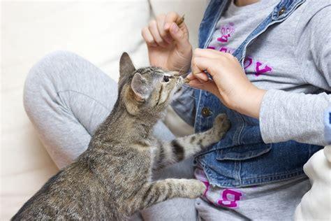 kenapa anak kucing sering sakit mata memanggil kucing kucing org