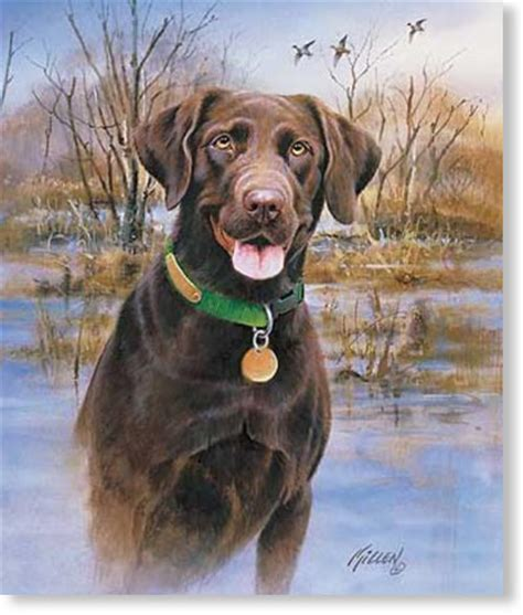Labrador Retriever Artwork by Lab Retrievers Artwork Lab Retrievers Art Prints Posters