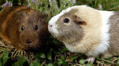 tiere suche ein zuhause tiere suchen ein zuhause sendungen a z