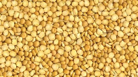 protein yellow split peas grain inspection packers stockyards administration