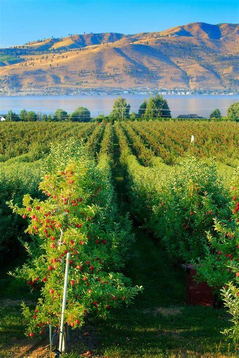orchard washington best 25 apple orchard ideas on apple tree