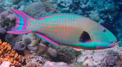 los peces de la peces caracter 237 sticas tipos de peces qu 233 comen d 243 nde viven