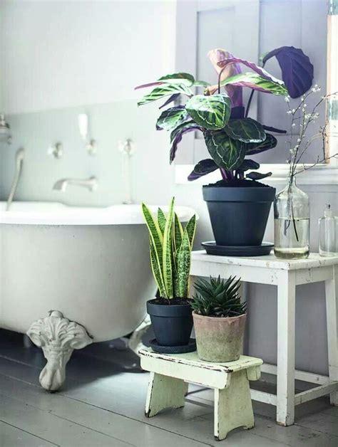 piante per bagno alcuni errori da evitare per la cura delle piante