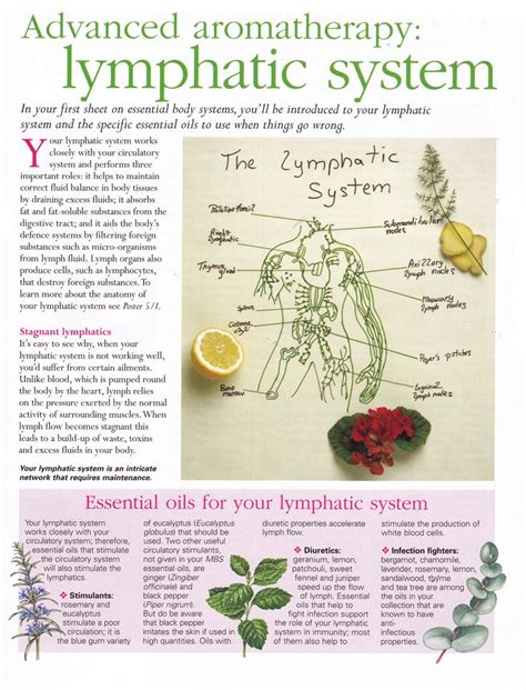 Essential Oils For Lymph Detox by 245 Best Images About Lymphatic Health On Non