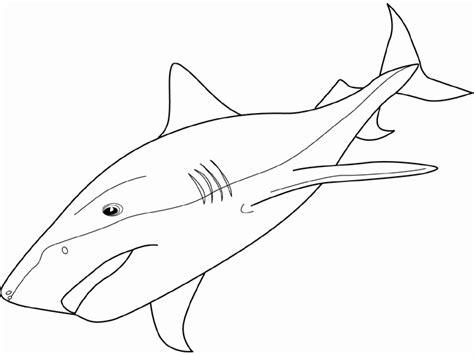 tiger shark coloring page coloring tiger shark picture coloring pages pinterest