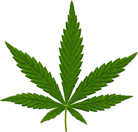 cannabis in png | web icons png