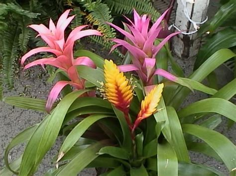 hawaiian house plants house plants how to grow and care for a houseplant garden helper gardening
